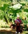 Roślina o wielkich liściach