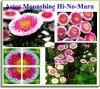 Aster Chiński Liliput Moonshine Mix (Callistephus chinensis)