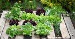 Ogród warzywno-kwiatowy w palecie