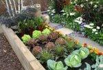 Sprzymierzeńcy w ogrodzie, czyli jak rośliny bronią się przed wrogami w ogrodzie?