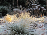 Jak zabezpieczyć trawy ozdobne na zimę?