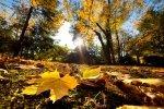 5 zalet sadzenia roślin jesienią