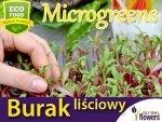 Microgreens - Burak liściowy czerwonolistny 10g