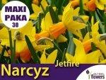 MAXI PAKA 30 SZT Narcyz Jetfire (Narcissus) CEBULKA