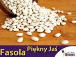 Fasola tyczna Piękny Jaś  (Phaseolus coccineus) 40g