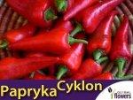 Papryka Ostra Cyklon (Capsicum annuum) 0,5g