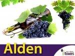 Winorośl Alden Sadzonka - odmiana deserowa Vitis 'Alden'