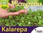 Microgreens - Kalarepa fioletowa 4g