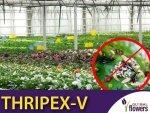 THRIPEX-V 50 000 (do zwalczania wciornastków) 1 litr