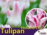 Tulipan liliokształtny 'Holland Chic' (Tulipa) CEBULKI
