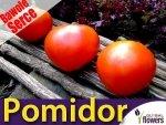 Pomidor Oxheart - Bawole Serce (Lycopersicon Esculentum) XXL 10g
