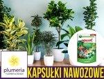 Agrecol Kapsułki nawozowe do roślin domowych 18 kapsułek