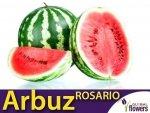 Arbuz Rosario Kawon (Citrullus vulgaris) Idealny do uprawy w Polsce