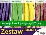Kolekcja Fasol Szparagowych Tycznych (zestaw 4 odmian) nasiona
