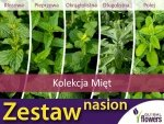Kolekcja Mięt (zestaw 5 odmian) nasiona