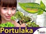 Baby Leaf (Portulaca oleracea) Portulaka Warzywna 0,5g