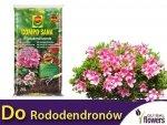 Podłoże do rododendronów COMPO 20L