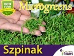 Microgreens - Szpinak 10g