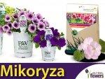 Mikoryza Grzybnia do roślin balkonowych SYMBIVIT® 150g