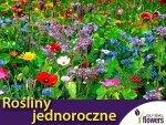 Mieszanka niskich roślin jednorocznych Nasiona 1g