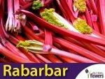 Rabarbar Lider Czerwony (Rheum rhabarbarum)  KŁĄCZA/CEBULKI