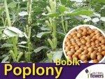 Poplony - Zielony Nawóz Ekologiczny - Bobik (1000 g)