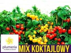 MIX pomidorów koktajlowych - zestaw 5 odmian pomidorów nasiona Z3