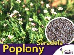 Poplony - Zielony Nawóz Ekologiczny - Seradela (500 g)