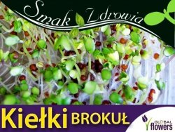 Nasiona na Kiełki - Brokuł (Brassica oleracea convar. botrytis var. cymosa) nasiona 10g