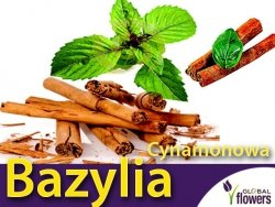 Bazylia cynamonowa  (Ocimum basilicum cinnamon) 0,5g