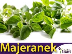 Majeranek - (Origanum majorana) 0,50+0,25g