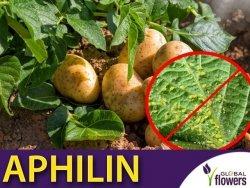 APHILIN 500 Osiec mszycowy (zwalcza mszycę ziemniaczaną) 100ml