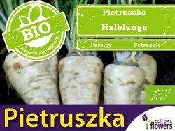 BIO Pietruszka korzeniowa Halblange nasiona ekologiczne 3g