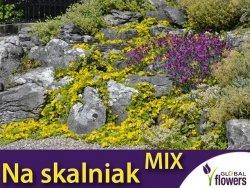 Zestaw wieloletnich roślin skalnych 2g