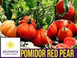 Pomidor RED PEAR Czerwona Gruszka (Lycopersicon Esculentum) nasiona 0,5g