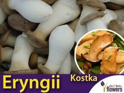 Boczniak mikołajkowy Eryngii (Pleurotus eryngii) Kostka do uprawy domowej 3 kg