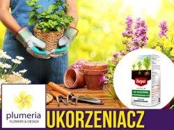 Korzonek PZ - Ukorzeniacz do półzdrewniałych roślin (do przesadzania) 30 ml