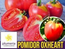 Pomidor OXHEART Bawole Serce (Lycopersicon Esculentum) nasiona 0,2g