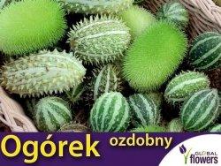 Ogórki OZDOBNE MIESZANKA (Cucumis) nasiona 0,3g LUX
