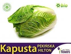 Kapusta pekińska Hilton (Brassica pleracea)