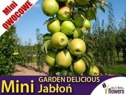 DRZEWKO MINI OWOCOWE Mini Jabłoń 'Garden Delicious' (Malus) Sadzonka