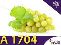 Winorośl A 1704  Sadzonka - odmiana bezpestkowa Vitis 'A 1704'