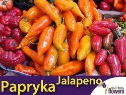 Papryka Ostra Jalapeno Orange Pomarańczowa (Capsicum annuum)
