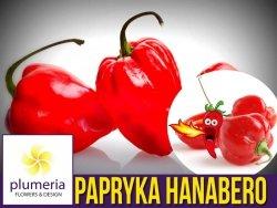 Papryka Chili HABANERO czerwona (Capsicum annuum) nasiona 0,15g