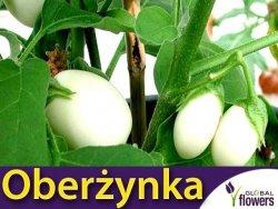 Oberżynka Golden Eggs (Solanum Melongena) 0,1g