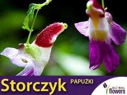 Storczyk Papużki (Parrot Orchid) nasiona