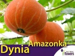 Dynia olbrzymia Amazonka (Cucurbita maxima) XL 100g