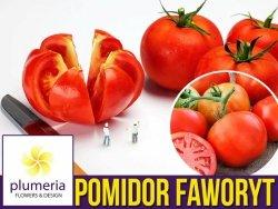 Pomidor FAWORYT Wielkie Owoce (Lycopersicon E.)nasiona XXL 10g