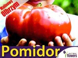 Pomidor MALINOWY OLBRZYM Wielkie Owoce (Lycopersicon Esculentum) nasiona 1g