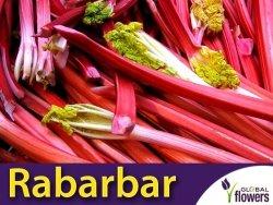 Rabarbar 'Victoria' (Rheum rhaponticum L.) XL 50g
